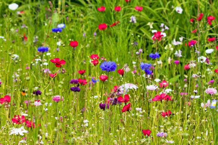 buonumore-fiori