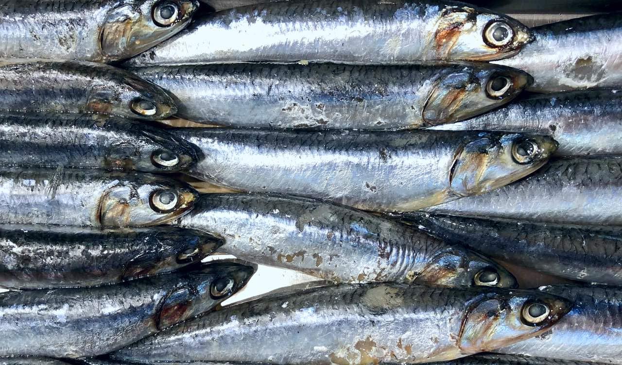 Pesce azzurro e altri cibi ricchi di omega 3 sono preziosi durante il ciclo