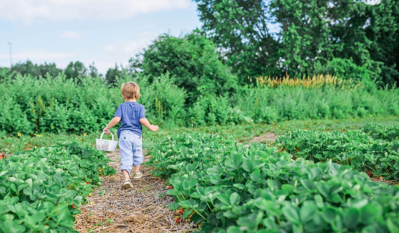 Al giardinaggio si possono dedicare grandi e piccini, tutti con grandi benefici.
