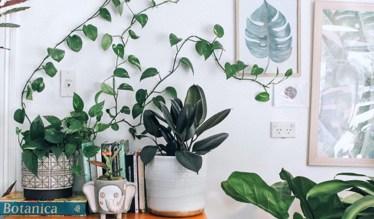 Anche se non avete un terrazzo, potete tenere delle piantine sui mobili del soggiorno o in cucina.