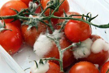 sprechi alimentari pomodori ammuffiti