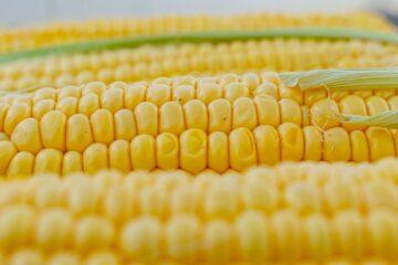 Anche-il-mais-viene-impiegato-per-la-realizzazione-della-pellicola-in-bioplastica.